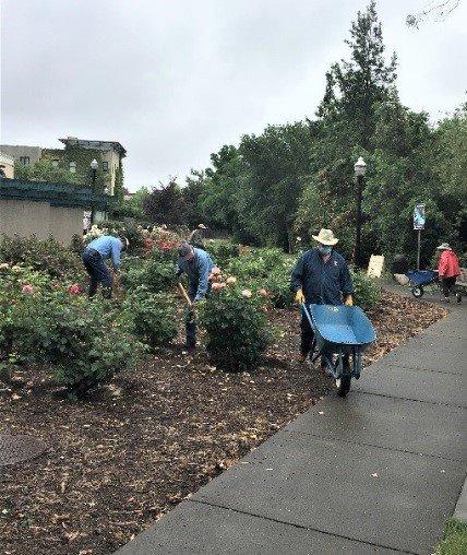 Volunteers Maintain Rose Garden