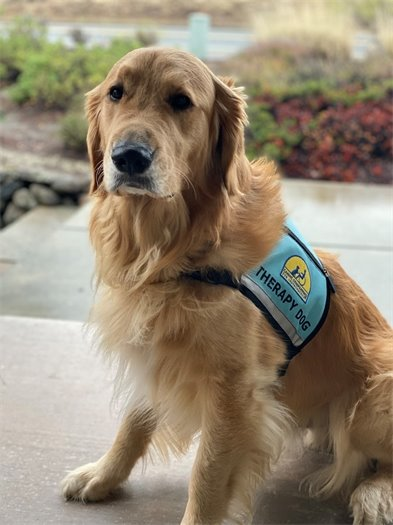 The City of Healdsburg's Therapy Dog named Leo