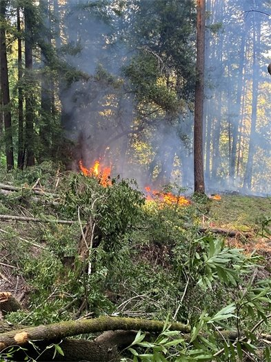 Image of brush fire in forested area